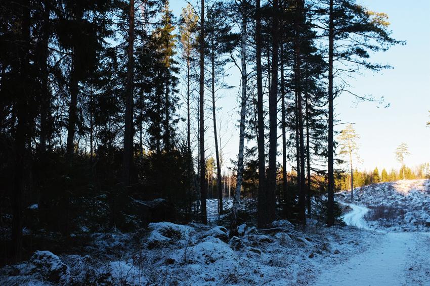 skogsfasighet