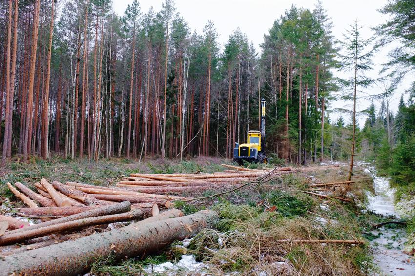 ratt_skogsmaskin_i_ratt_skog