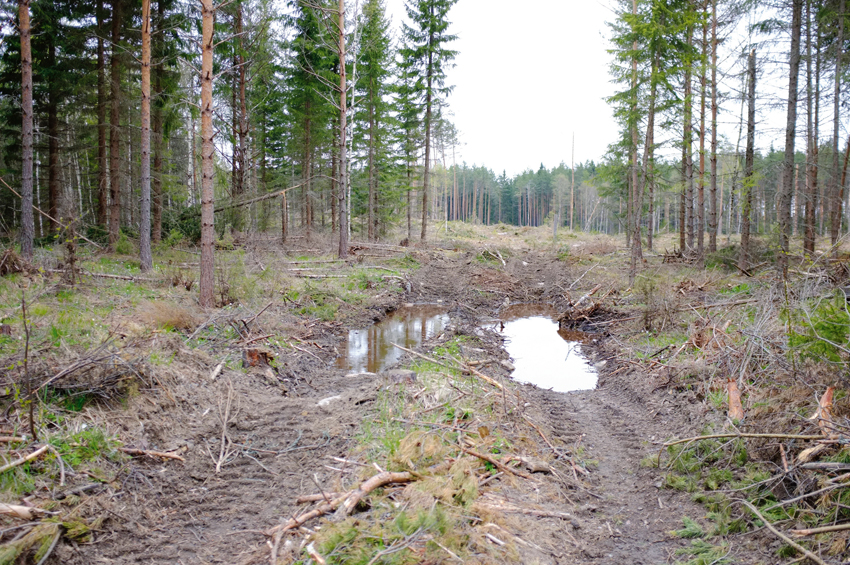 Idag finns kunskapen och teknologin för att avverka och transportera skog utan att orsaka skador på marken och vattnet. I filmen Spårlös visar maskinförare och forskare hur det är möjligt.