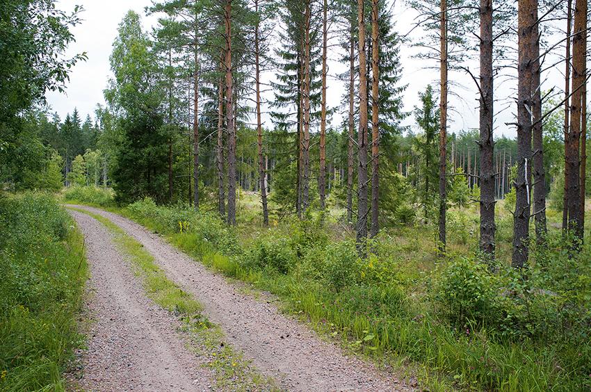 Virkespriserna ligger över lag ganska stilla i hela landet visar skogsindex för mars 2017. Däremot ökar fastighetspriserna för skogsmark och ständigt noteras nya rekord på många ställen.