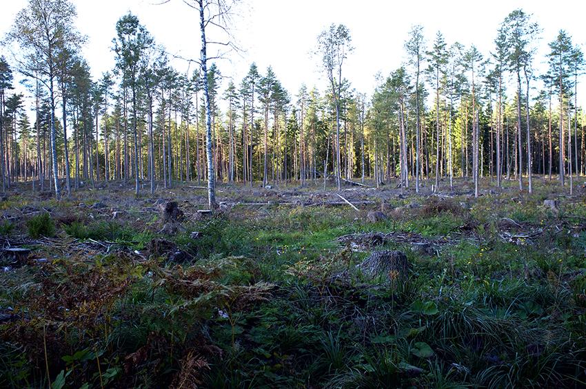 skogsbaserad_biobransle