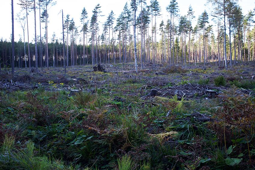 skogsbidrag