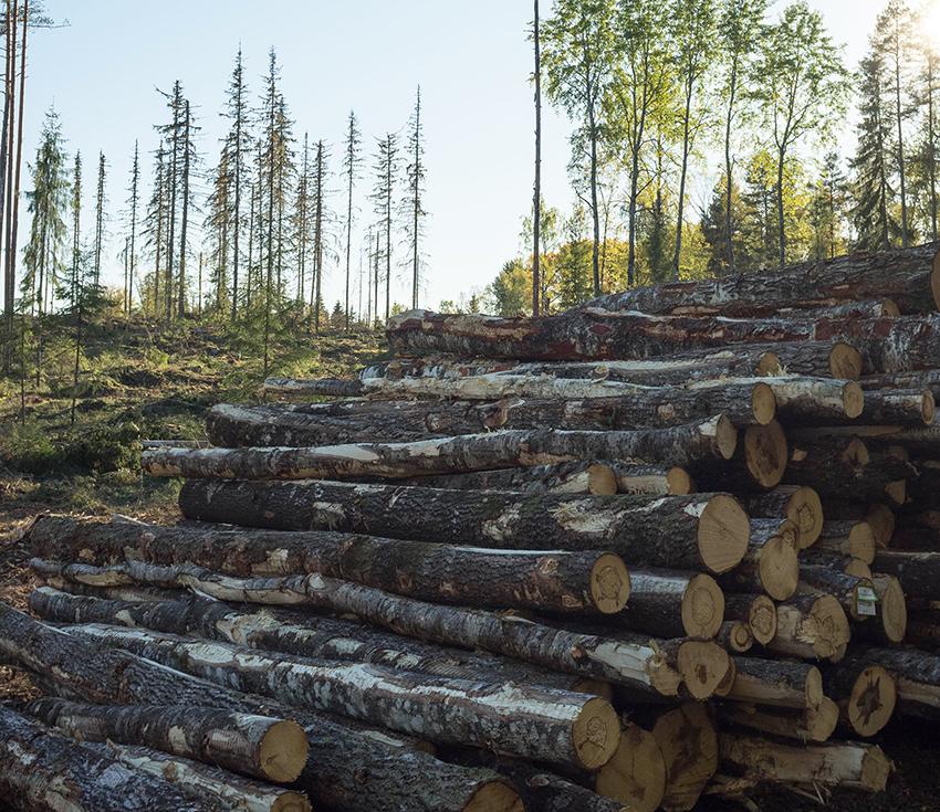 Nu släpps rapporten Skogsgårdens lönsamhet som visar hur lönsamt det är att vara skogsägare och driva skogsbruk i Sverige. Rapporten visar att Lönsamheten, som beräknas genom skogsnettot, har minskat sedan 2011. Sveriges skogsgårdar återinvesterar årligen i kostnader för skogsvård, medan intäkterna kommer ojämnt. Foto: Per Eriksson