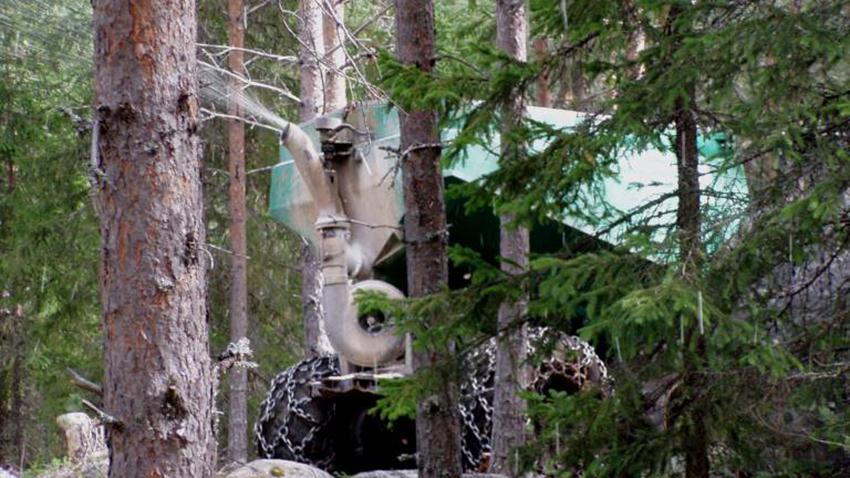 skogsgodling