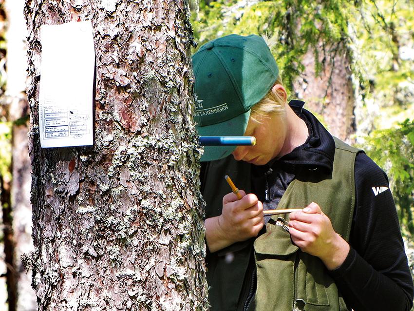 Virkesförrådet fortsätter att växa. Det visar den nya statistik som Riksskogstaxeringen vid SLU publicerar. Foto: Åke Bruhn