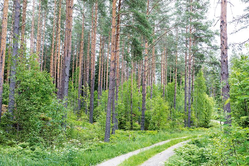 Priserna på skogsfastigheter fortsätter att öka i nästan hela landet, enligt fastighetsexperten Ulrik Abelson. Foto: Per Eriksson