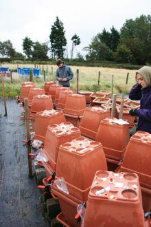 Gräsmark i krukor ställdes under tak för att simulera torkperiod. Foto: SLU