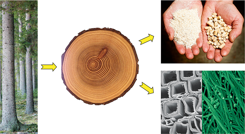 Presbild_TreeSearch_förslag_V3_MS190121