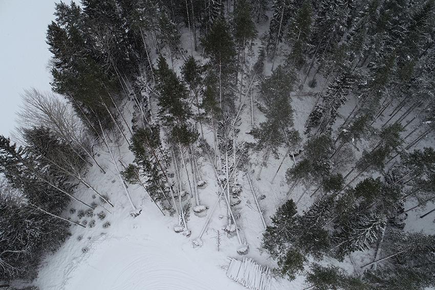 Drönarbild visar skadorna efter Alfrida. Foto: Ronnie Andersson, Sveaskog.