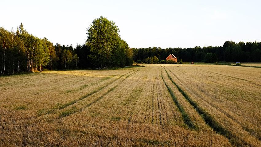 Priset för den mest värdefulla åkermarken har sjunkit, medan priset för den minst bördiga åkermarken i norra Sverige, har stigit. Foto: Per Eriksson