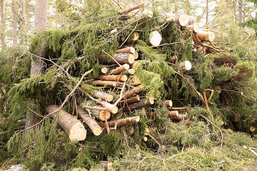 Stormen Alfrida drabbade Upplands skogsägare hårt. Mer än 500.000 kubikmeter skog fälldes över en natt. Även Åland drabbades hårt av Alfrida och får nu svensk hjälp för att röja upp den stormskada skogen på ön.