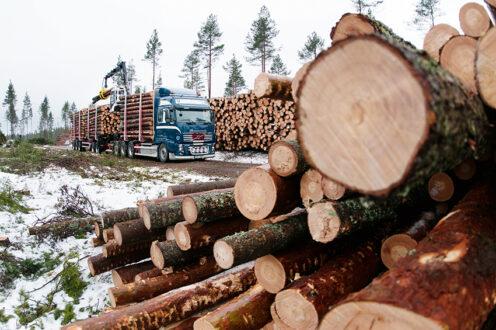 Transportsektorn har blivit effektivare och tekniken har gått mot mer bränslesnåla bilar. Samtidigt har totala mängden lastbilstransporter ökat i landet vilket motverkar de minskade utsläppen. Foto: Erik Viklund, Skogsforsk.