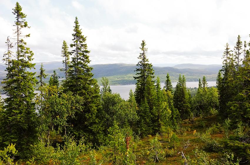 Ny omgång av Tandem Forest Values – 40 miljoner till skogsforskning i Finland och Sverige. Foto: Per Eriksson