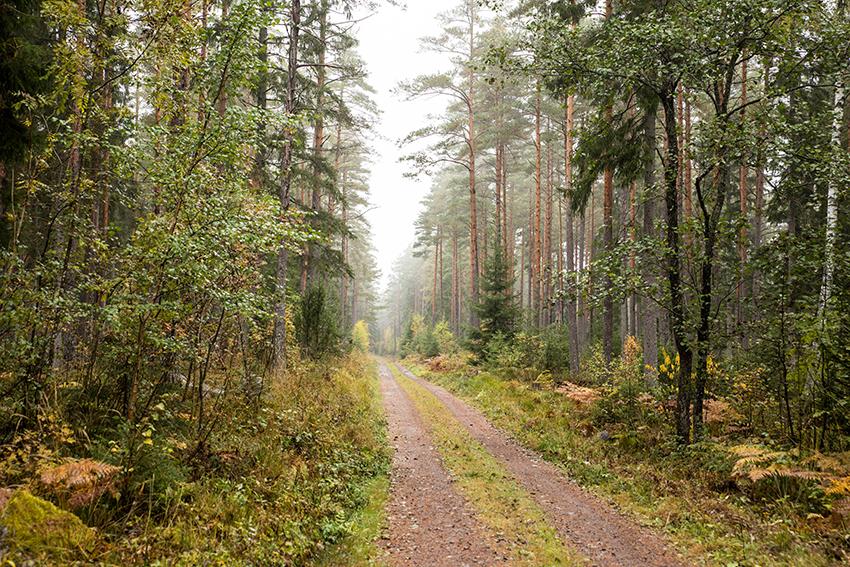 skogsfastighet