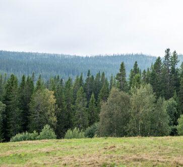 Källa & grafik: Svefa AB.