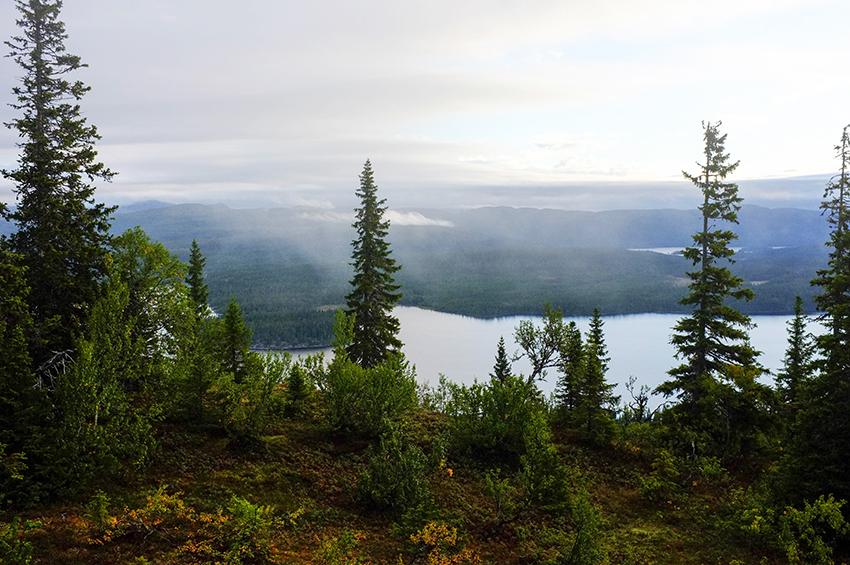 Den 7 februari fattade 28 000 skogsföretagare beslut om att gå samman i den nya ekonomiska föreningen Norra Skog. Sveriges till ytan största skogsägarförening har alltså bildats. Foto: Per Eriksson