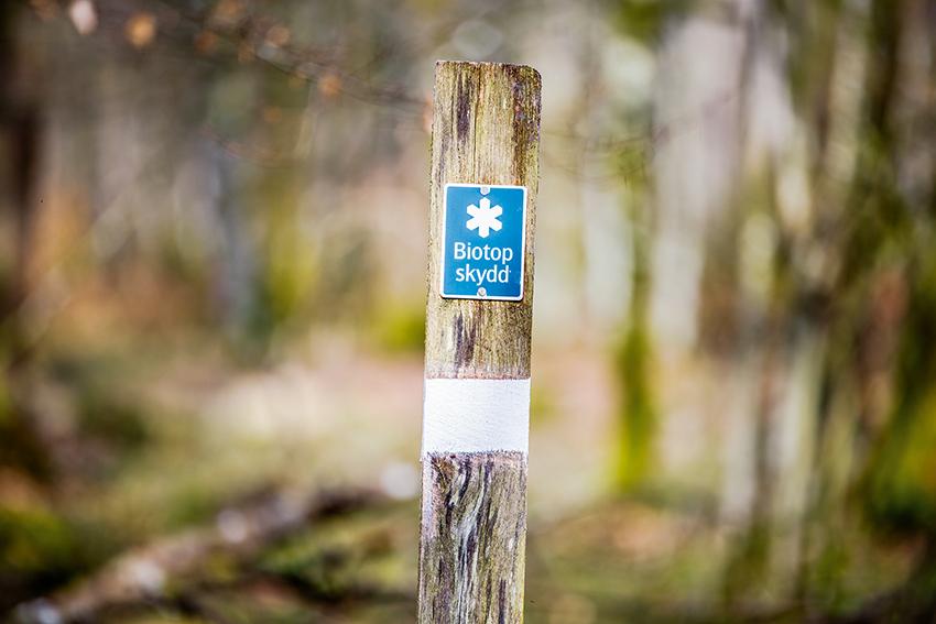 Ökade insatser mot granbarkborren i skyddade områden. Det beskedet gav Skogsstyrelsen vid Granbarkborrekonferensen 2020 i Linköping den 27 februari. Foto: Yaman Albolbol, Skogsstyrelsen